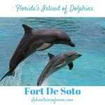 Swimming with Dolphins: Fort De Soto