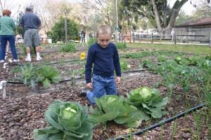 Master Gardeners Festival