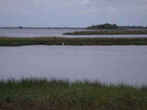 Shell Mound. Cedar Key. Florida