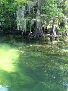 The boat ride at Wakulla Springs takes you down the river