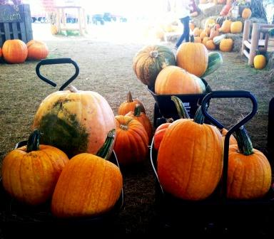 Visiitng the pumpkin patch