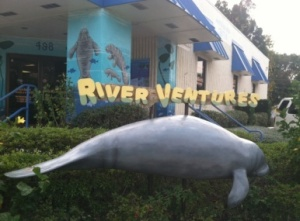 Finding Manatees with River Ventures in Crystal River, FL