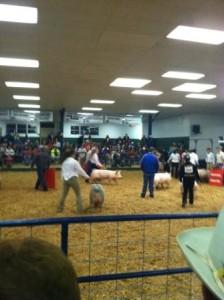 SEYF Swine Show