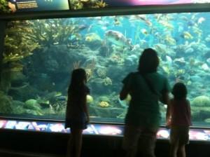 Adventures at the Florida Aquarium
