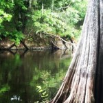 Stuck on the Withlacoochee River