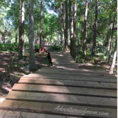 Scott Springs Park Bike Obstacle Trail