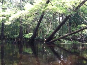 Stranded on the Withlacoochee, an Adventures of Mom tale