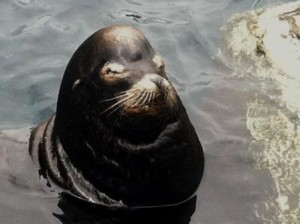 Sea Lions always have the last word, like this handsome fella!