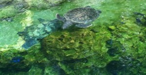 Sea Turtle Rescue center at Seaworld