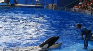 Shamu hamming it up with his trainer