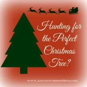 Make some memories this Christmas by taking your kids Christmas Tree Hunting!