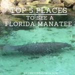 Best Places in Florida to See Manatees