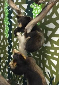 Mischievous bear cubs at Silver Springs State Park. Yeah, not real!