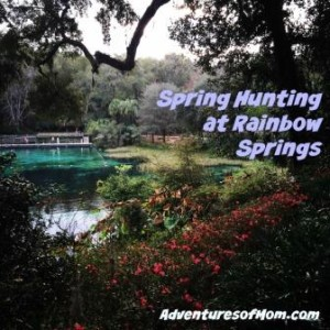 The flowers were in bloom during our recent Rainbow Springs expedition