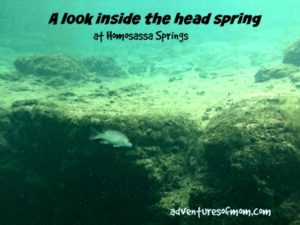 spring hunting at Homosassa Springs