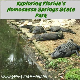 Homosassa Springs was an old Florida attraction rescued by the State Park Service. A great place for a Florida family adventure!