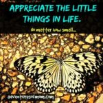 Appreciate the little details of life, no matter how small.