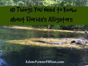 Tips on how to avoid a Florida alligator encounter