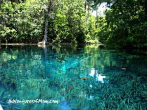 Explore new worlds with kayaks- like Florida's natural springs!