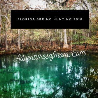 Adventures of Mom took to hunting this year- Florida Spring Hunting, that is!
