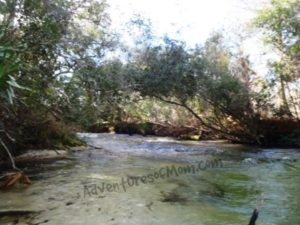 The base of the rapids on the Juniper Run Paddle Trail in the Ocala National Forest.