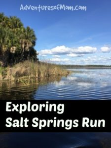 Exploring Florida's Salt Springs Run in the Ocala National Forest