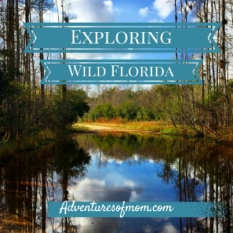 Exploring Wild Florida- now is the best time!