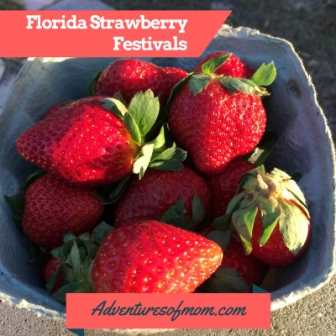 Florida Strawberry Festivals: Celebrating this delicious juicy red berry