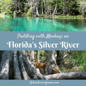 Paddling with monkey's on Florida's Silver River