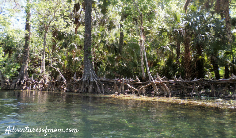 Paddling Adventures on Florida's Silver River