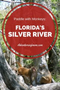Paddling with Monkeys on Florida's Silver River
