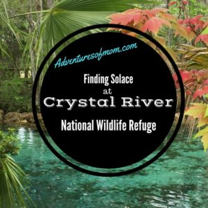 Finding solace at Crystal River National Wildlife Refuge