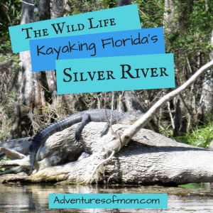 Paddle Adventures on Florida's Silver River