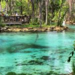 Three Sisters Springs, a manatee sanctuary in Crystal River
