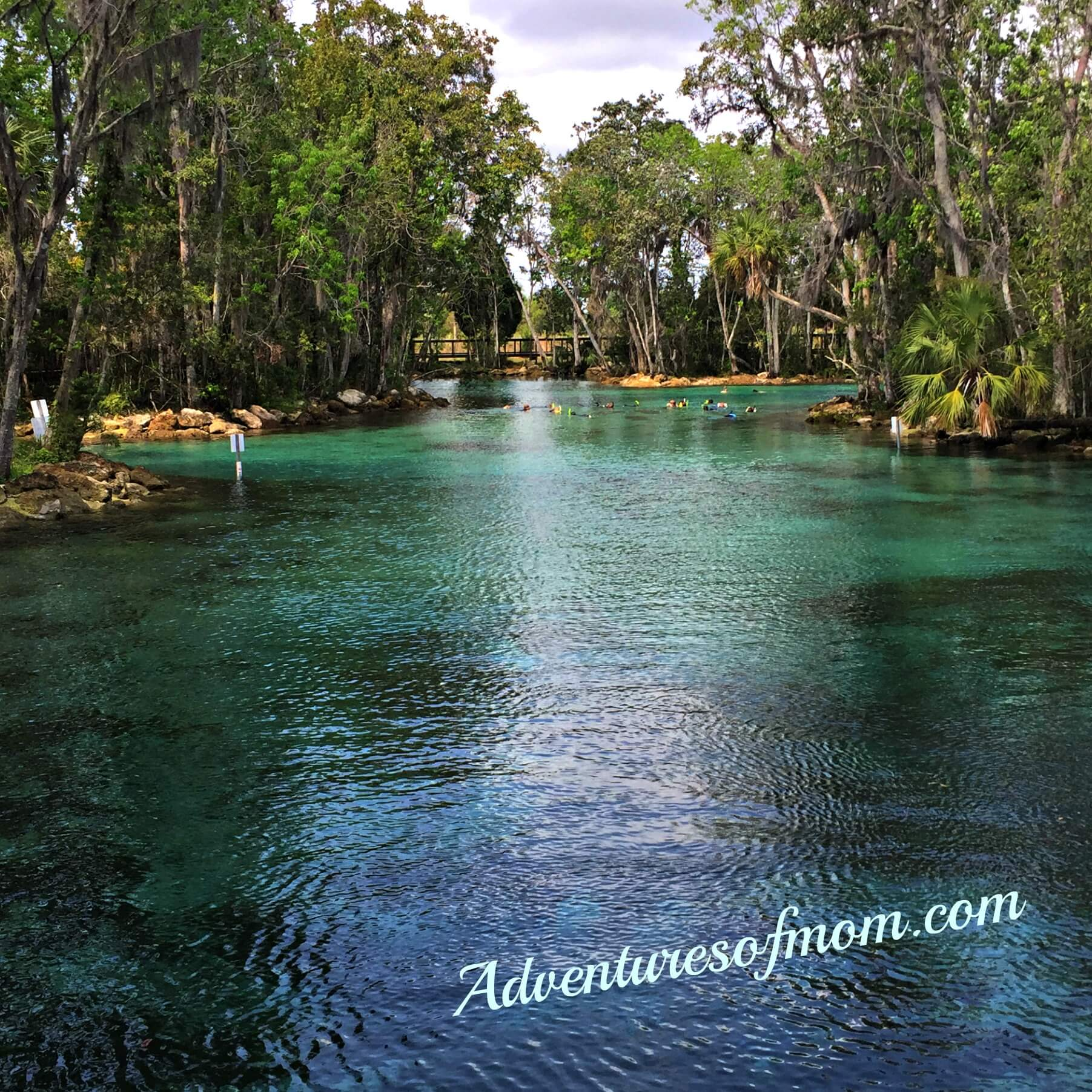 Three Sisters Springs in Crystal River, winter home of the Florida Manatee.