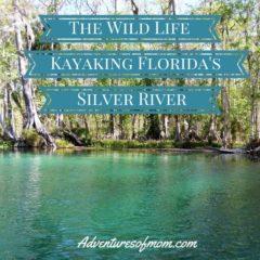 Kayaking Florida's Silver River