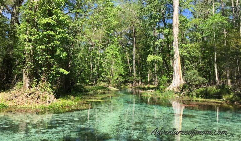 Exploring Florida's Blue Springs
