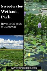 Sweetwater Wetlands Park: Haven in the heart of Gainesville. https://adventuresofmom.com