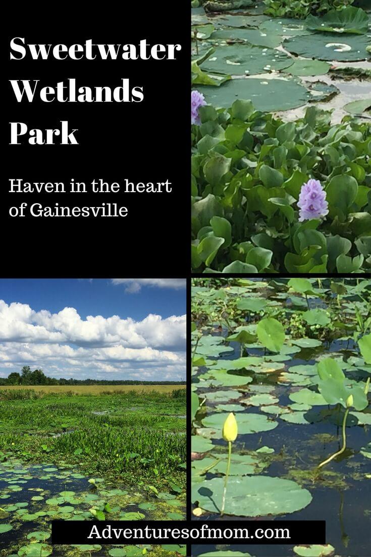 Sweetwater Wetlands Park: Haven in the heart of Gainesville. https://adventuresofmom.com