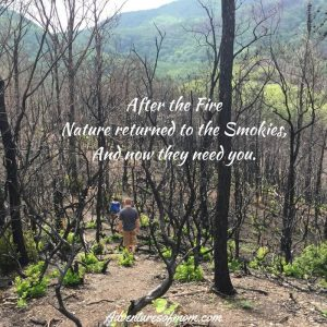After the fire, nature returned to the Smokies. Now they need you.