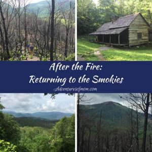 After the Fire: Returning to the Smokies