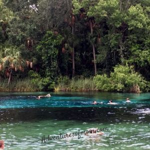 Family Fun at Amexander Springs in the Ocala National Forest