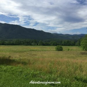 Hunting for the Wildlife in Cades Cove