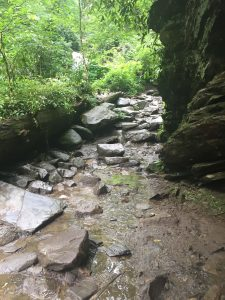 The Trail to Grotto Falls in the Great Smoky Mountains National Park