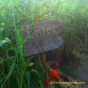 21 Reasons to Love Fall #6- Corn Mazes!