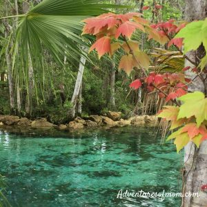 21 Reasons to Love Fall #19 Leaves Changing Color (Yes, Even in Florida!)