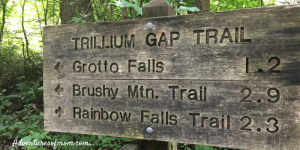 7 Little-Known Facts About the Great Smoky Mountains National Park