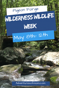 Wilderness Wildlife Week in Pigeon Forge