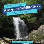 Wilderness Wildlife Week May 8th-May 12th 2018 in Pigeon Forge