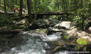 Top Summer Family Adventures in the Smoky Mountains
